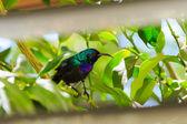 Palestine sunbird outside the window — Stock Photo