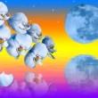 Big blue moon and branch of the orchids flowers — Stock Photo
