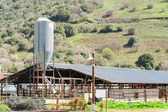 Rustic cowshed with silo in the countryside — Stock Photo