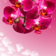Dark purple orchid flowers on blurred gradient — Stock Photo