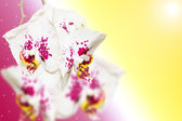 Purple white spotted orchid flowers on gradient — Стоковое фото