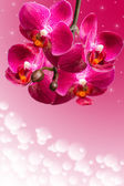 Dark purple orchid flowers on blurred gradient — Стоковое фото