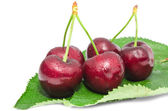 Big ripe cherry juicy sweet beries wet with water drops fruits — Stock Photo