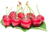 Cherry ripe berry wet with droplets fruits — Stock Photo