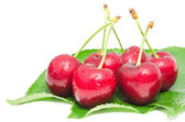Wet ripe cherry berry fruits with water droplets — Stock Photo