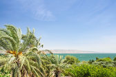 Date palms on the shore of Lake Kinneret — Stock Photo