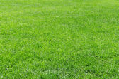 Sunlight fresh natural grass background — Stock Photo