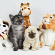 Little Kitty among Cuddly Toys — Stock Photo