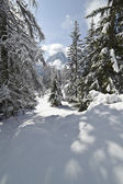Snow Climbing through a forrest in the Dolomites — ストック写真