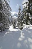 śniegu, wspinaczki poprzez forrest w dolomitach — Zdjęcie stockowe