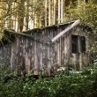 Stock Photo: Cabin in forest