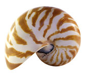 Isolated Nautilus Shell — Stock Photo