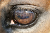 Close up of a horse eye — Stock Photo