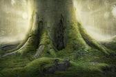 老树的根 — 图库照片