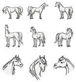 Standing arabian horses — Stock Vector