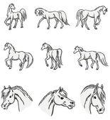 Walking arabian horses — Stock Vector