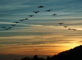 Migração de pássaros ao pôr do sol — Foto Stock