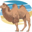 Camel - 