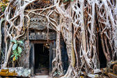 Temple Ta Prohm — Stock Photo