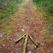 Arrow on the forest path — Stock Photo