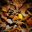 Texture of autumn leaves — Stock Photo