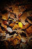 Texture di foglie d'autunno — Foto Stock