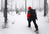 Man goes through the woods on snowshoes — Stock Photo