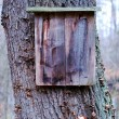 Photo: Old wooden sign oak tree