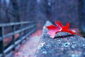 Roja hoja otoñal en el viejo puente de madera — Foto de Stock