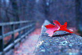 Red autumn leaf on old wooden bridge — Stock Photo