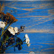 Dry flowers on blue background — Stock Photo