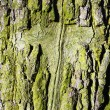 Cross in old oak bark — Stock Photo