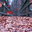 Stock Photo: Falling leaves