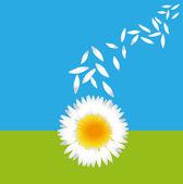 Flying petals of daisies — Stock Vector