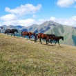 Running horses mountains — Stock Photo