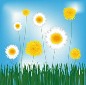 Dandelions and marguerites — Stock Vector