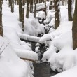 Snowy creek — Stock Photo