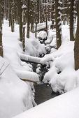 Verschneite creek — Stockfoto