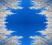 Frame of snow branches — Stock Photo