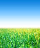 蓝蓝的天空草 — 图库照片