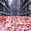 Path covered with leaves — Stock Photo