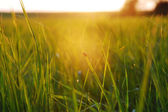 Evening in the meadow — Stock Photo