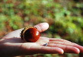 Chestnut on a palm — Stock Photo
