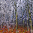 Stock Photo: Autumn frost on trees