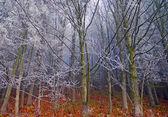 木の上の秋の霜 — ストック写真