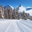 Stock Photo: Cross-country ski trail