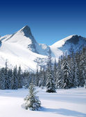 Bomen bedekt met sneeuw en hoge besneeuwde bergen — Stockfoto