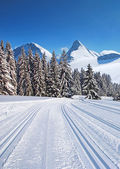 Cross-country ski trail — Stock Photo
