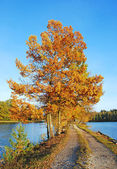 Autumn colors under blue sky — Stock Photo