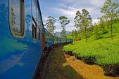 Train tea — Stock Photo
